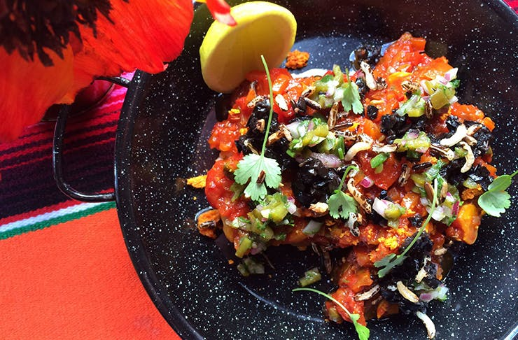 The Best Mexican Food In Auckland, mexican food, where to find mexican food in auckland