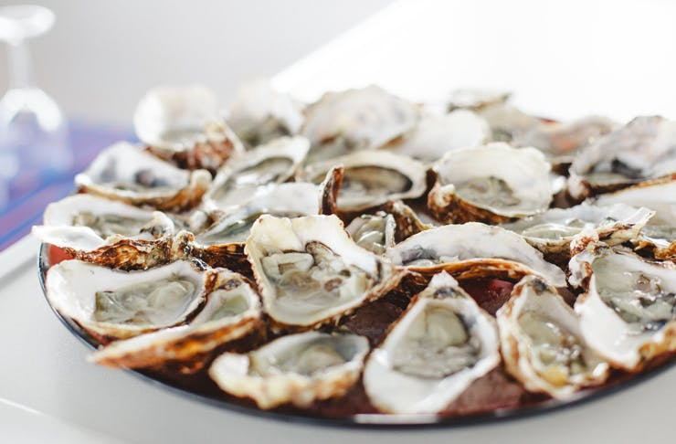 best oyster happy hours sydney