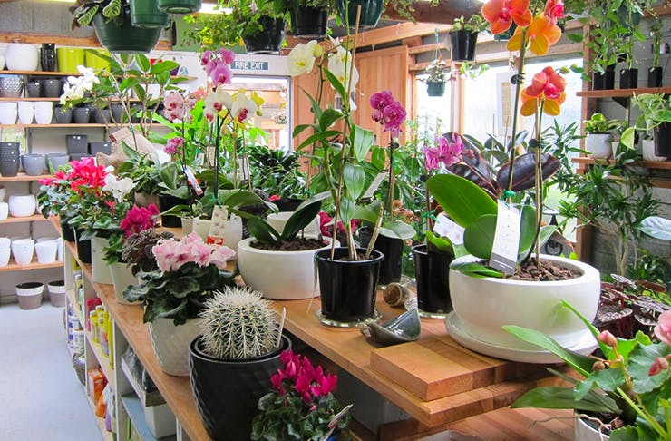Where To Buy Plants In Auckland