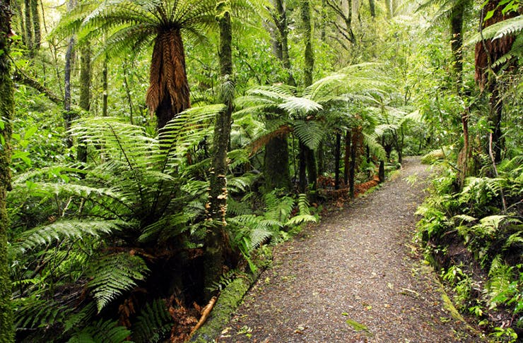 Auckland's Prettiest Walks