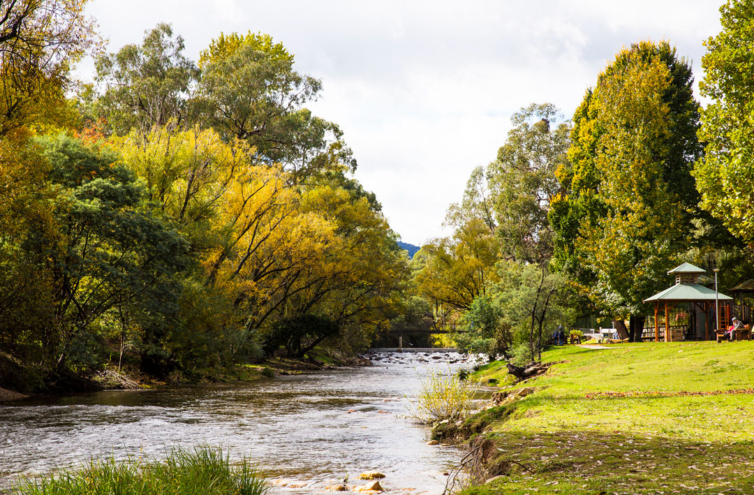 The Ovens River flows through a park surrounded by autumn leaves in Bright, Victoria.