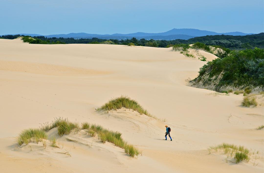 A man walks across sand dunes high above the landscape near Mallcoota, Victoria.