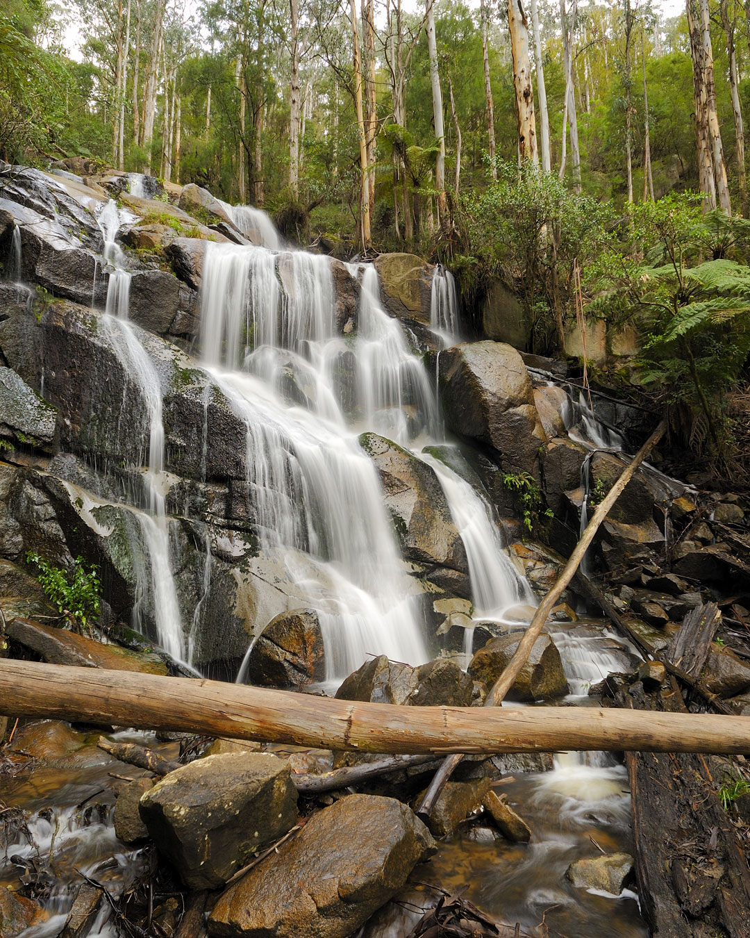 Water cascading over Toorongo Falls in West Gippsland, Victoria.
