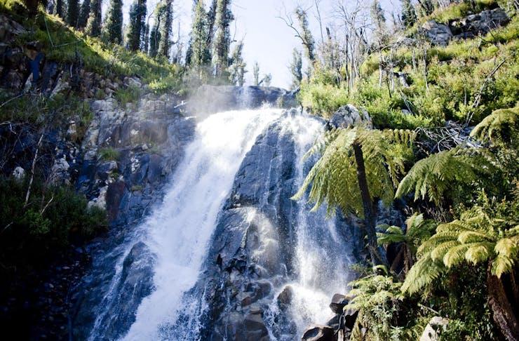 Water cascading over Steavenson Falls near Marysville, Victoria.