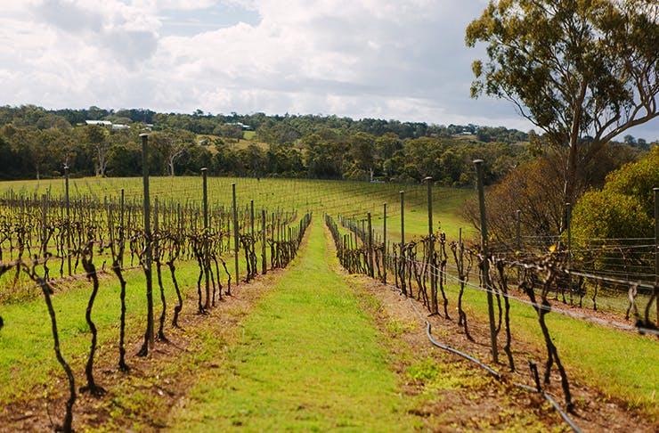 best wineries near Brisbane