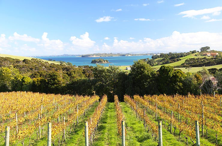 7 Of The Best Wineries In And Around Auckland