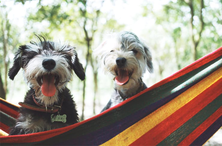 dog friendly camping spots