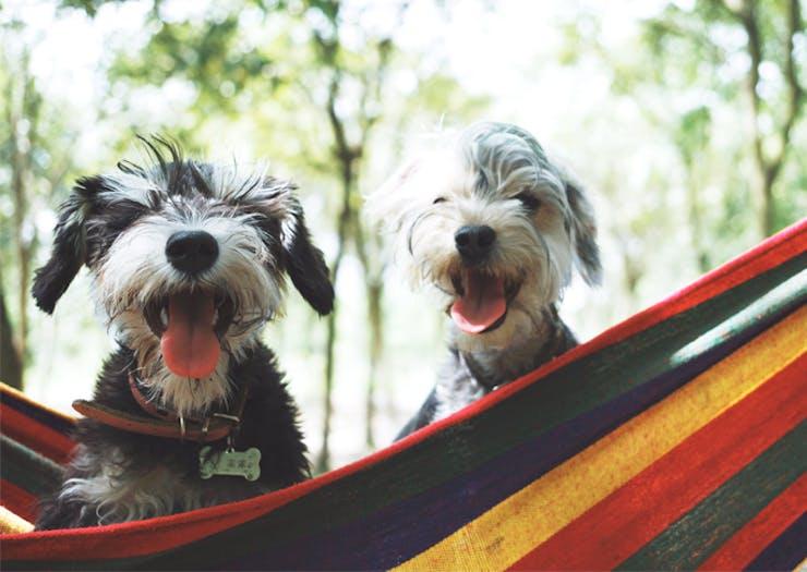 dog friendly camping spots
