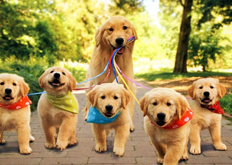 best dog walks sunshine coast