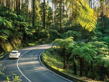 Hit The Road And Take In 7 Of The Best Scenic Drives In Victoria