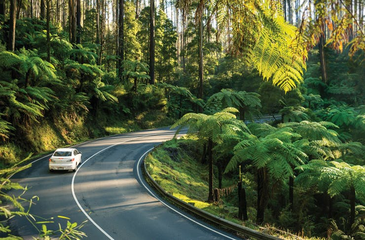 7 Of The Best Scenic Drives In Victoria | Melbourne | Urban List