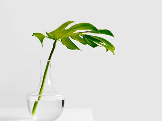botanica-by-kismet