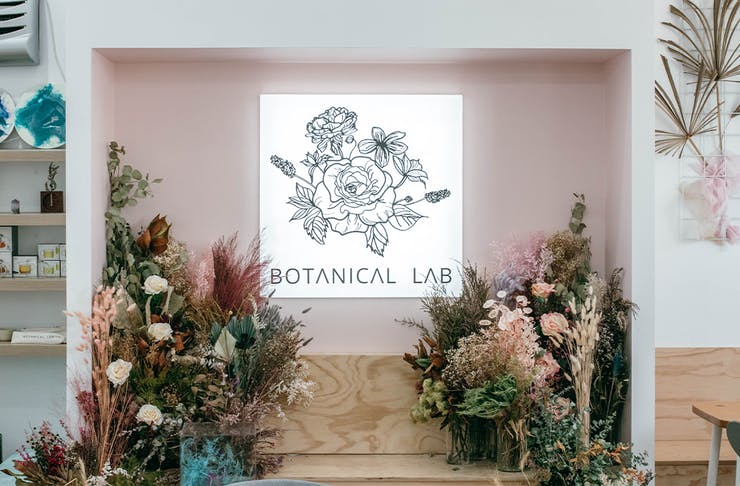 botanical lab's light box and dried flowers
