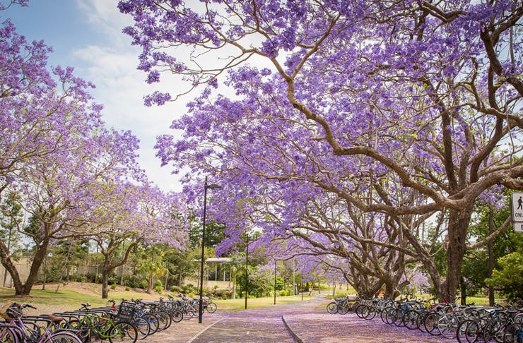 Brisbane pretty walks
