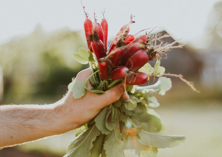 Get Growing At 6 Of The Best Brisbane Community Gardens You Can Join