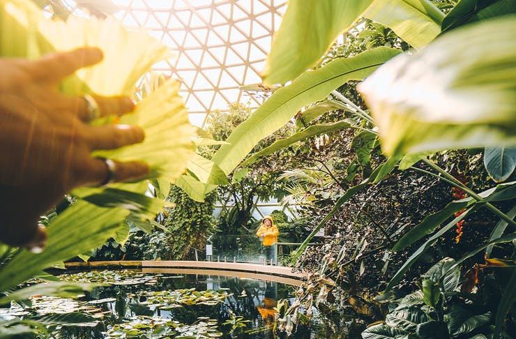 A woman standing on a bridge in a massive glass dome greenhouse full of plants.
