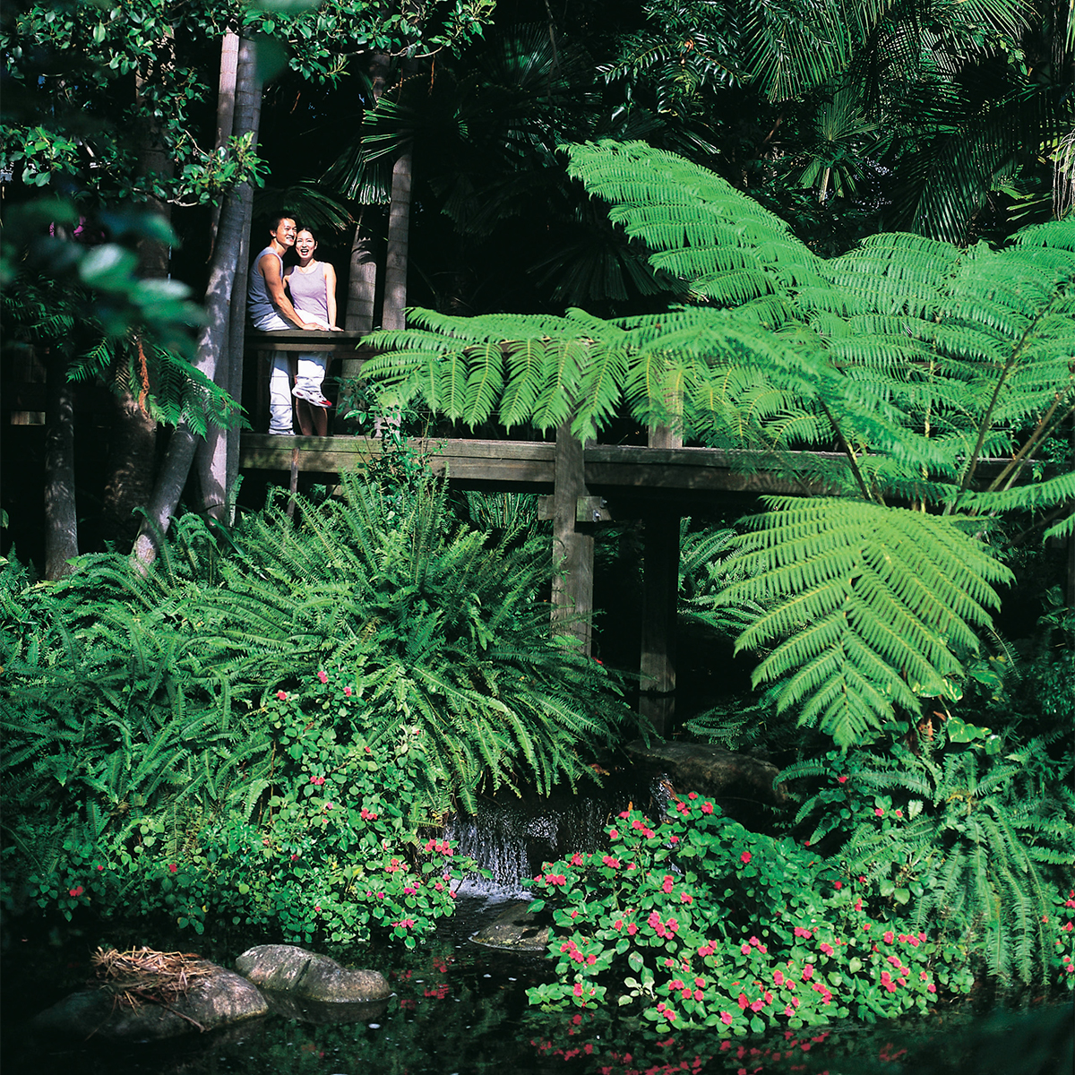 Two people standing on a bridge in the midst of a rainforest area