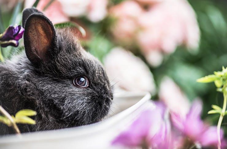 bunny-cuddle-tent-sydney