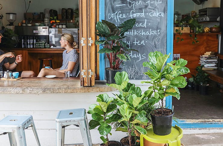 where to buy-plants-brisbane