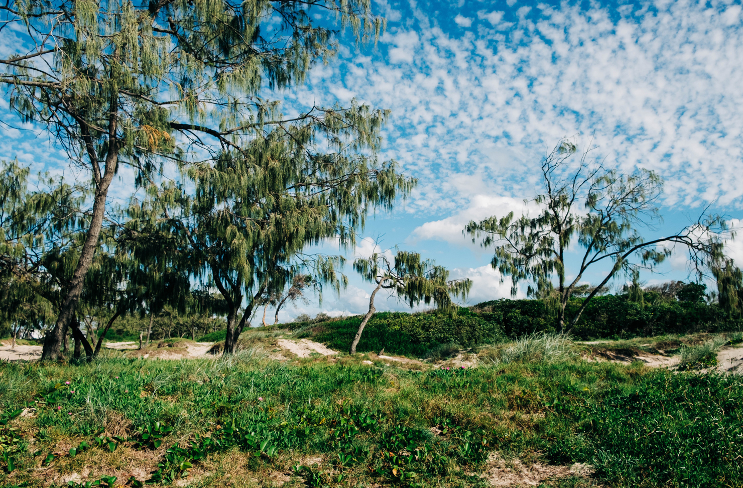 A landscape shot of the campground at Inskip Point in Queensland.