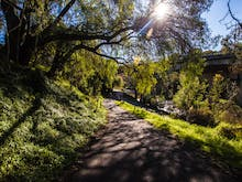 Get Some Fresh Air With The Best Walks Around Melbourne's Suburbs