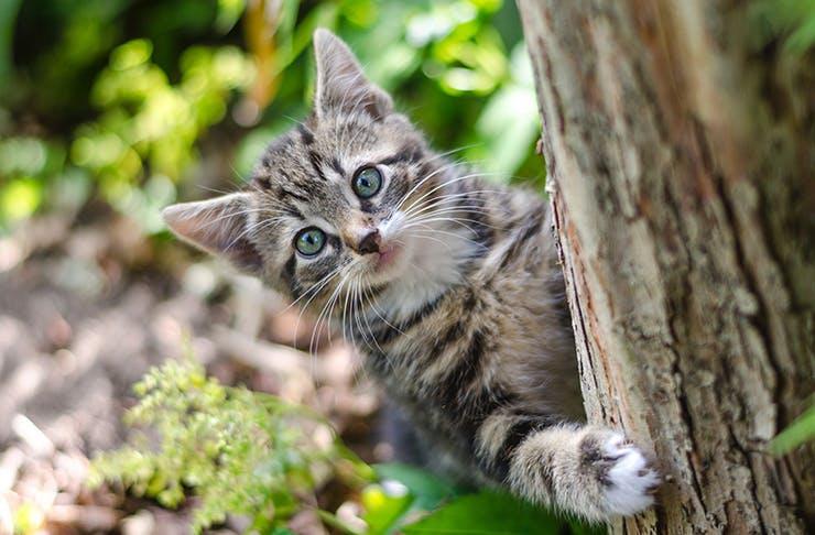 kitten-melbourne