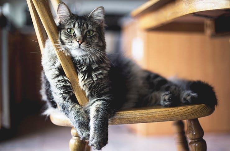 Hobbits Knob Cat Retreat