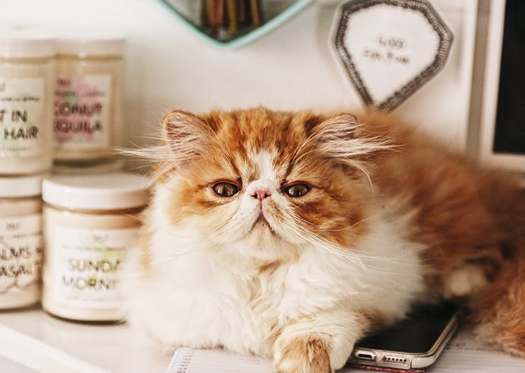 Cats With Jobs | Meet Australia's Busiest (& Fluffiest) Kitty