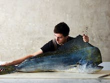 Everything You Need To Know About Charcoal Fish, Josh Niland's Newest Sydney Eatery