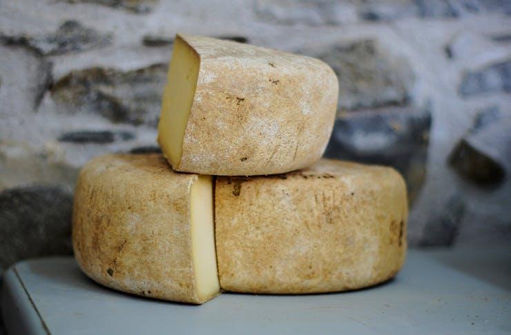 Brisbane cheese festival