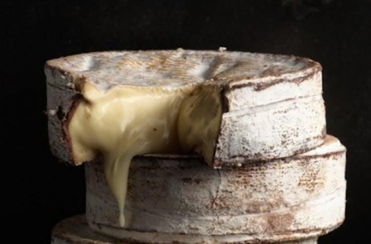 cheese_festival_brisbane