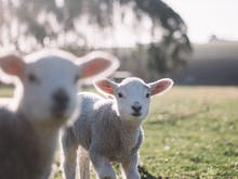 Everywhere You Can Cuddle Baby Animals On The Sunshine Coast