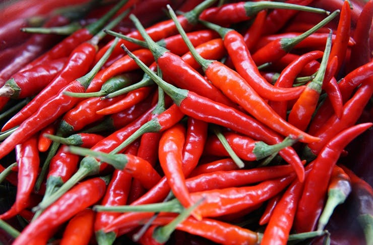 regional nsw chilli festival