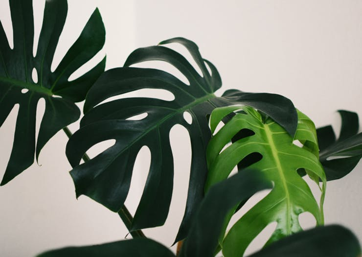 All The Indoor Plant Sales You Need To Know About This Weekend
