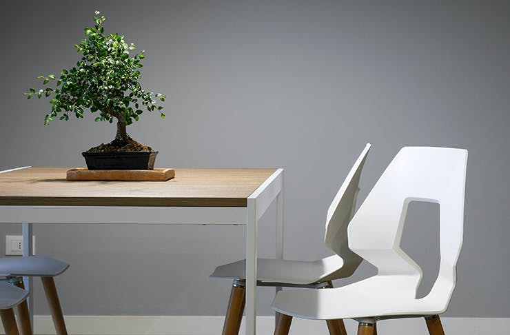 A clean and minimal dinner table with a bonsai plant on top, surrounded by white seats.