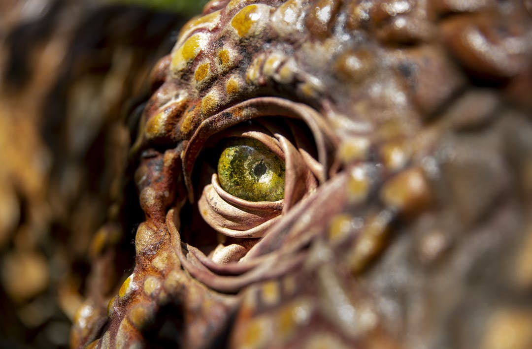 Melbourne Zoo Will Become Real Life A Jurrassic Park Next Month