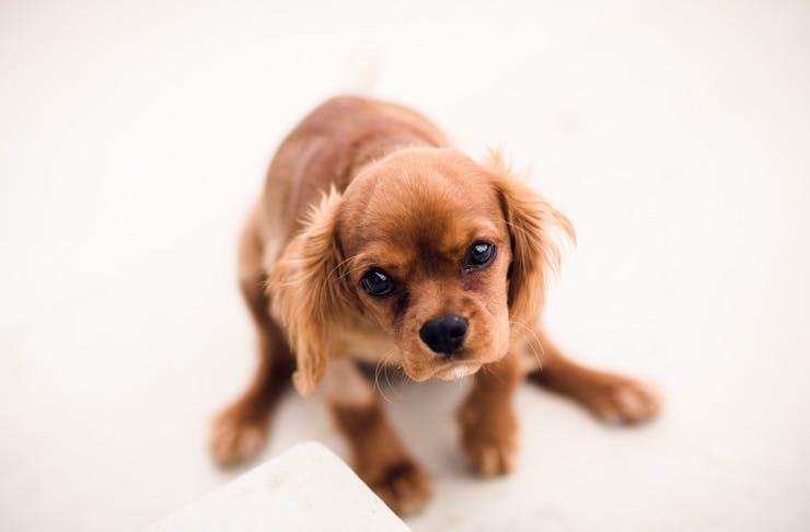 dog adoption drive