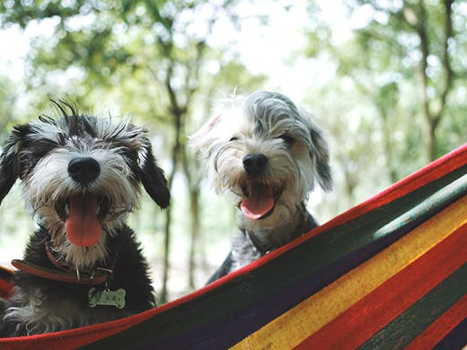 7 Pet-Friendly Camps In New Zealand | New Zealand | Urban List