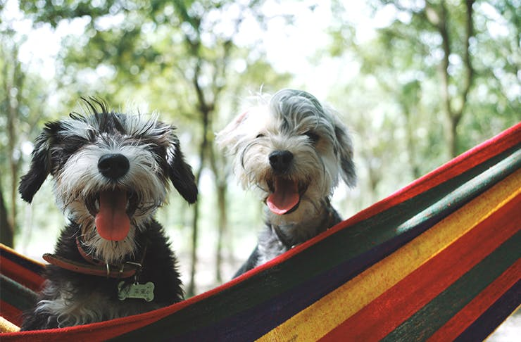 7 Pet-Friendly Camps In New Zealand