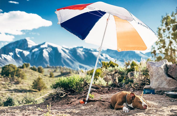 best-dog-friendly-campsites-nsw