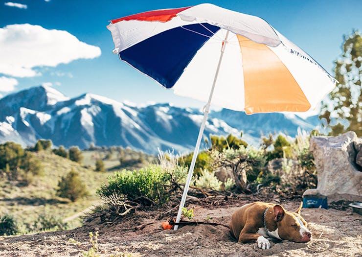 best-dog-friendly-campsites-nsw