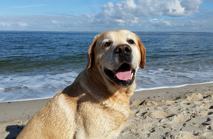 Dog friendly beaches, Brisbane