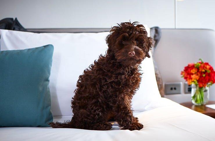 dog-friendly-hotels-sydney