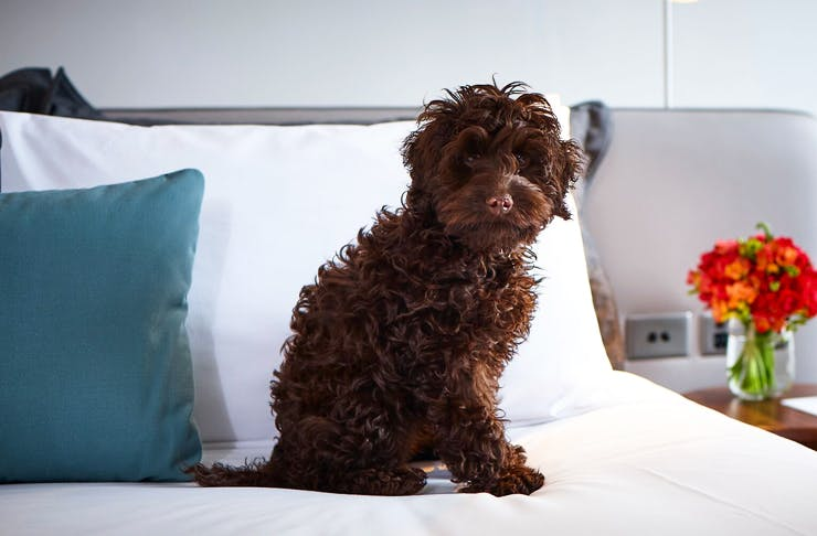 dog-friendly-hotels-sydney