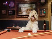 A Guide To The Best Dog-Friendly Destinations In Melbourne