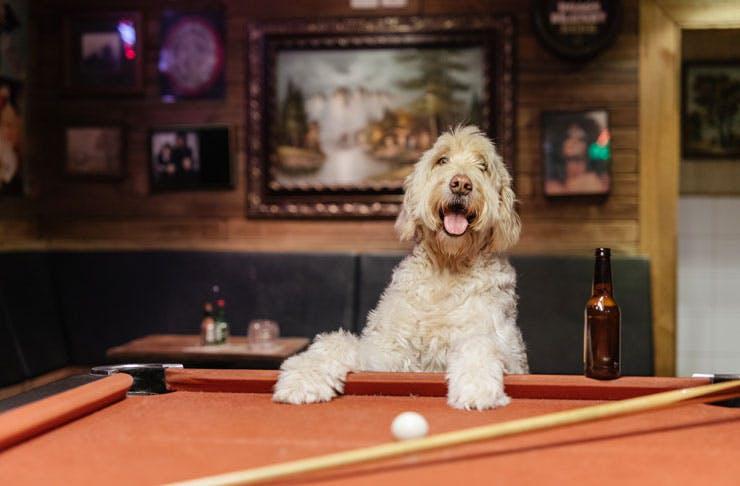dog-friendly-melbourne