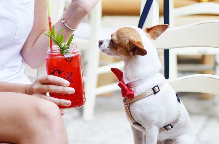 dog-high-tea-london