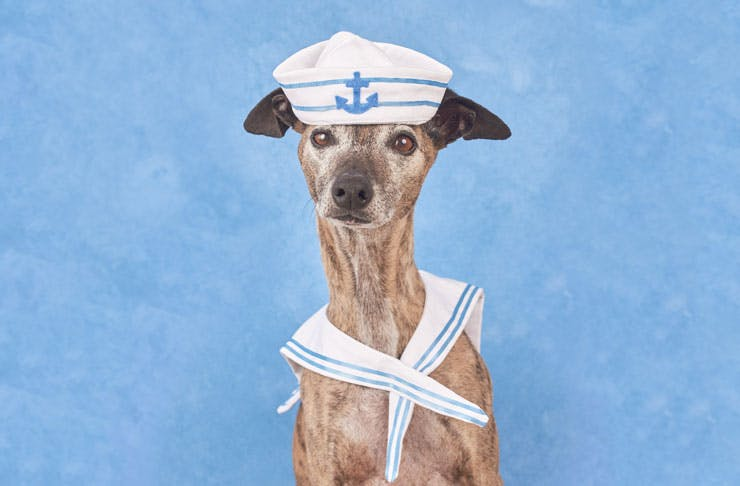 dog-photog-studios-sailor-pop-up