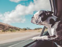 The Best Winery Tours You Can Do With Your Dog In NSW
