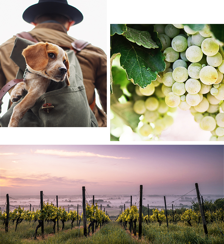 winery tours with your dog nsw